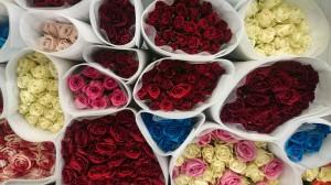 Tisíce růží doručuje Florea po celé České republice každý všední den.